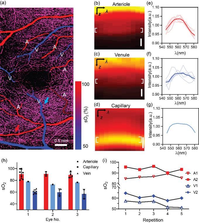 Human retina oximetry by visOCT
