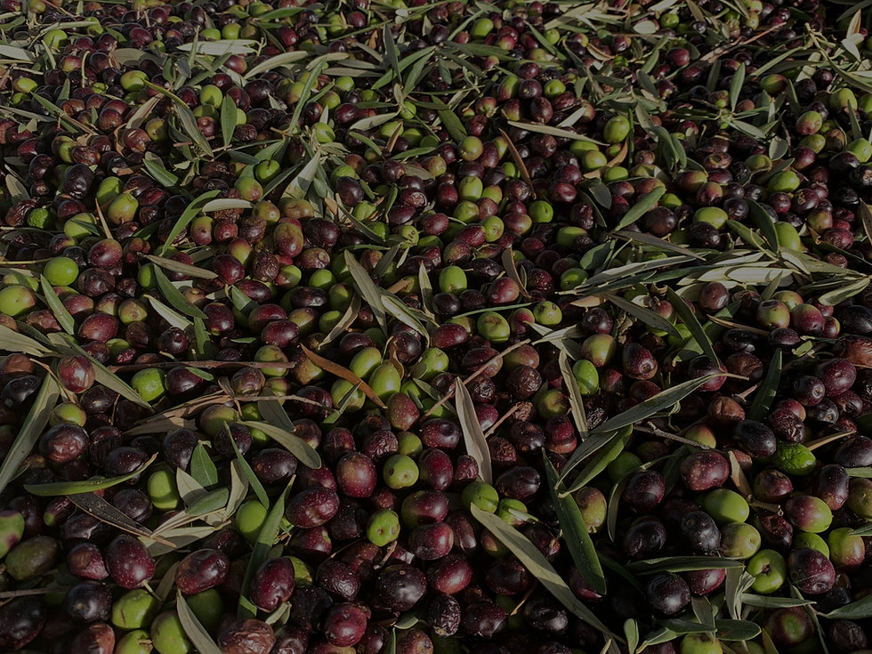 Olives%20waiting%20to%20be%20turned%20in