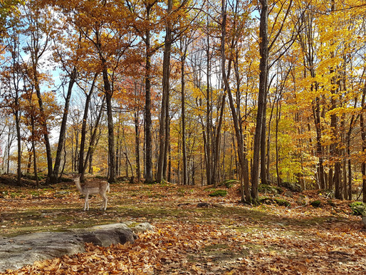 A day at Omega Park