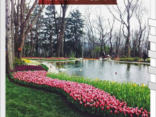 حديقة اميرجان... المشهورة بحديقة ازهار التوليب