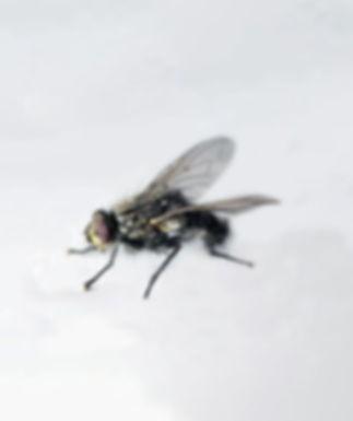 Fliegen - ein Gesundheitsrisiko