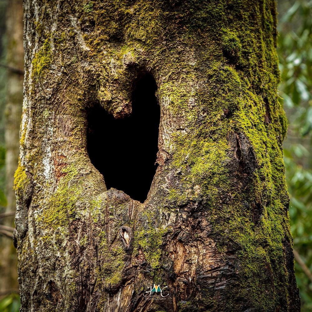 Iconic tree heart along trail