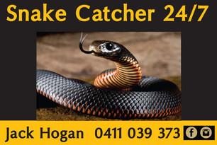 SnakeCatcher.jpg