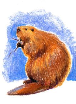 beaver_ beaver!