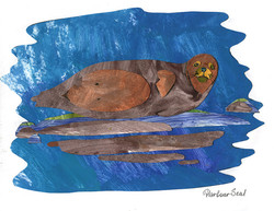 harbour seal one_75