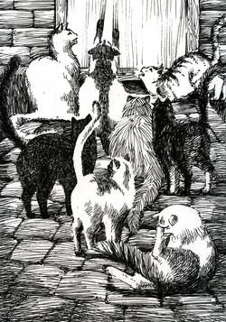 Cat'o Nine Tales