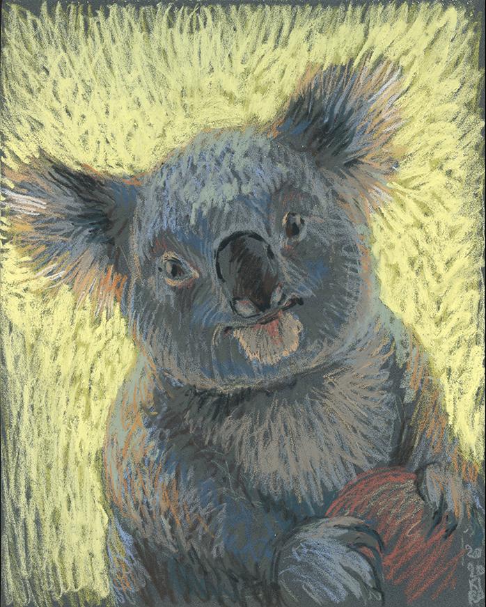 I'm Koala