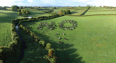The cows say NO..!
