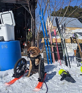 Our super pup is now living life on skis