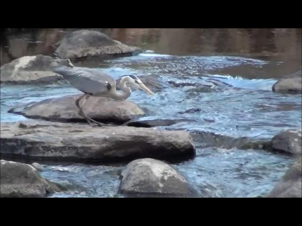 heron at Happy Meadows
