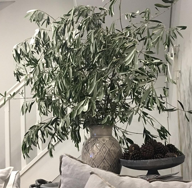 Olive foliage - home styling