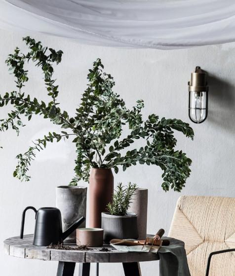 Wattle foliage - home styling