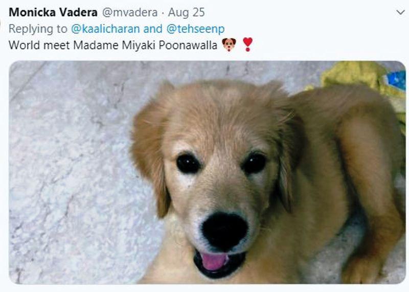 Monicka Vadera's Dog