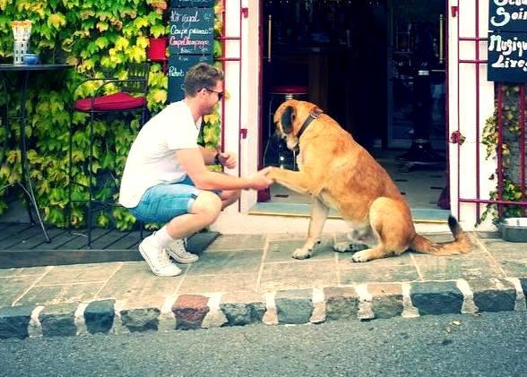 Lockie Ferguson loves dogs