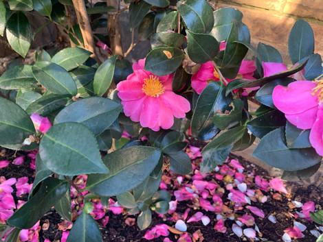 Memorial Garden in bloom.jpeg