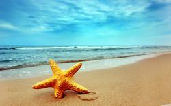 kids for life Star-Fish-Beach_edited