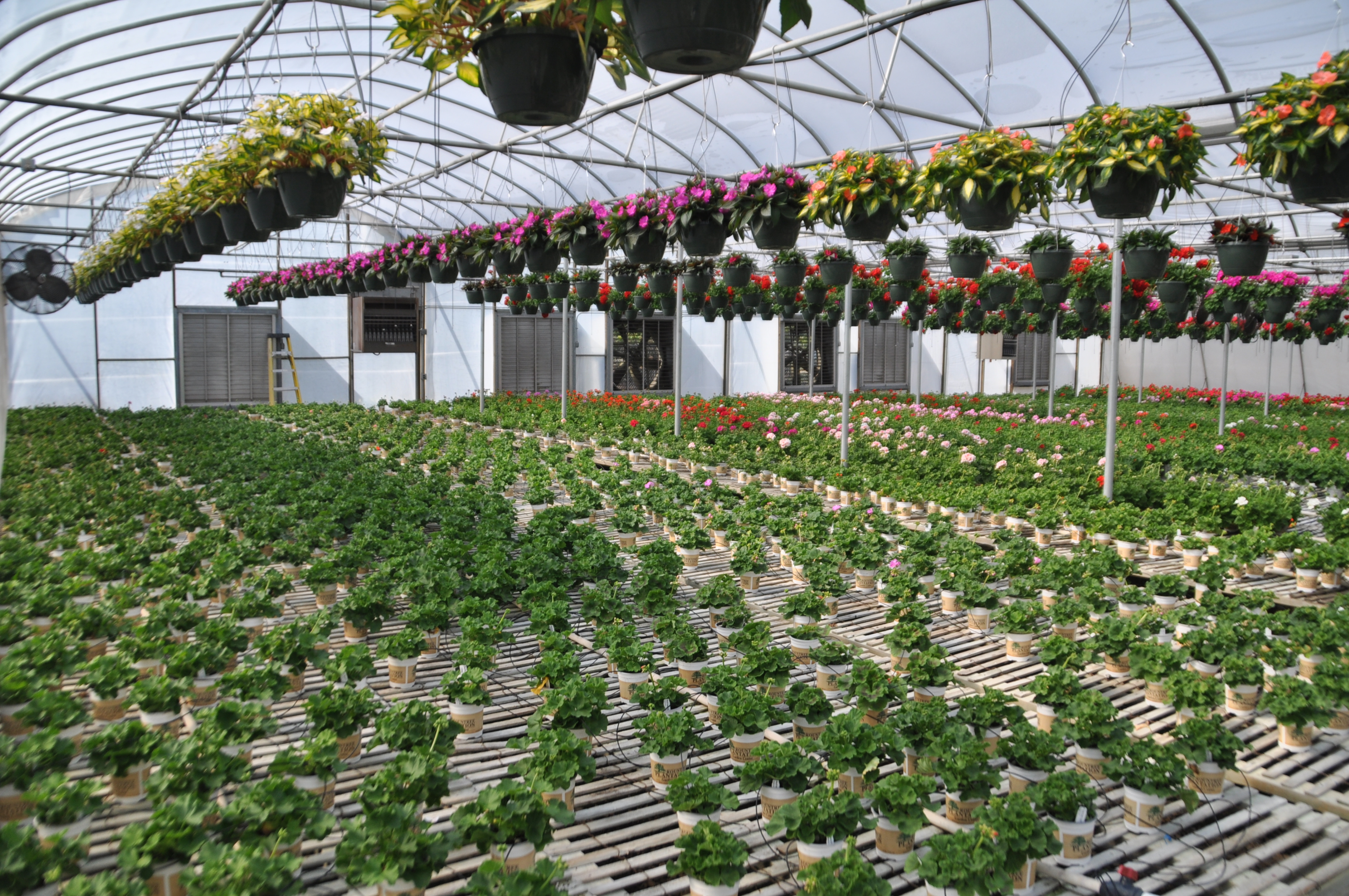 Rountree Nursery Charlotte North Carolina ~ TheNurseries