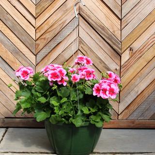 geranium basket 3.jpg