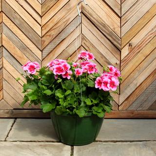 geranium basket 8.jpg