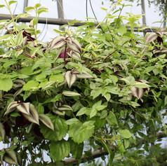 Mixed Foliage Basket Combo 1