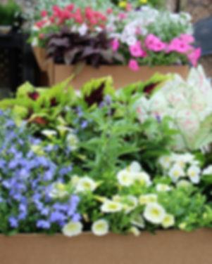 Garden Box Shade 1.jpg