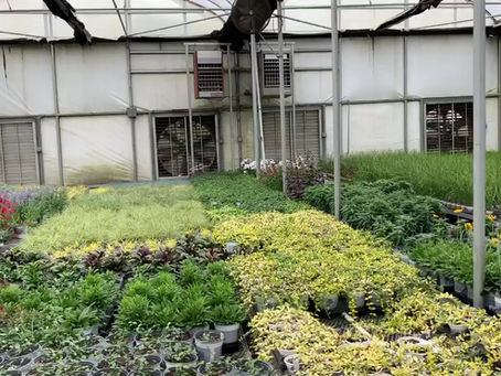 Rountree Grown Perennials
