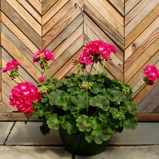 geranium basket 14.jpg