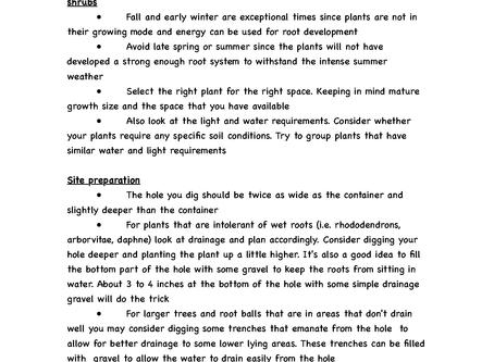 Proper Planting Techniques