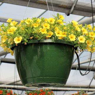 Calibrachoa Yellow Basket.jpg