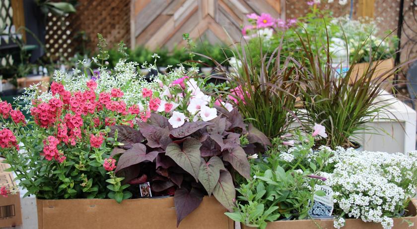 Deluxe Garden Box Wk 1