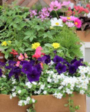 Garden Box Sun (Vibrant)1.jpg