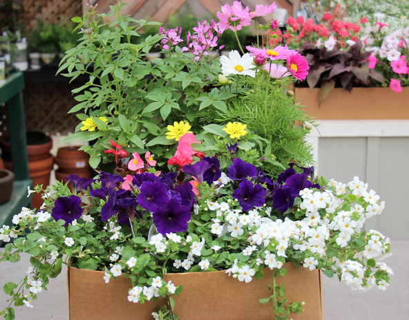 Vibrant Garden Wk 1