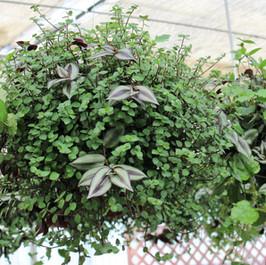 Mixed Foliage Combo 2
