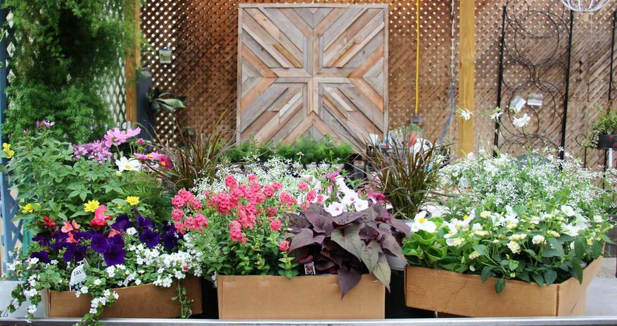Garden Box Combinations Week 1