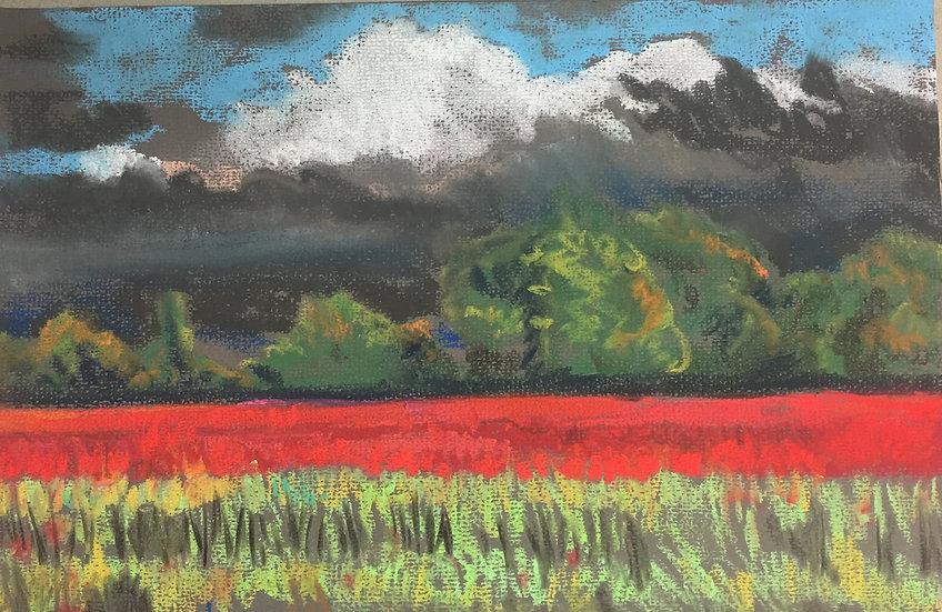 Poppy Fields 20x30cm