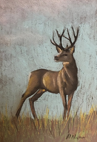 Stag 30x50cm