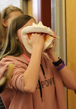 conch shell horn