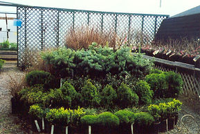 ask about our shrubs & fruit trees...