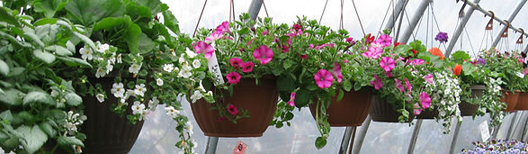 pretty hanging baskets...