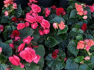 brilliant blooms...