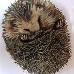 Hedgehog (Slimey and Spiky book)
