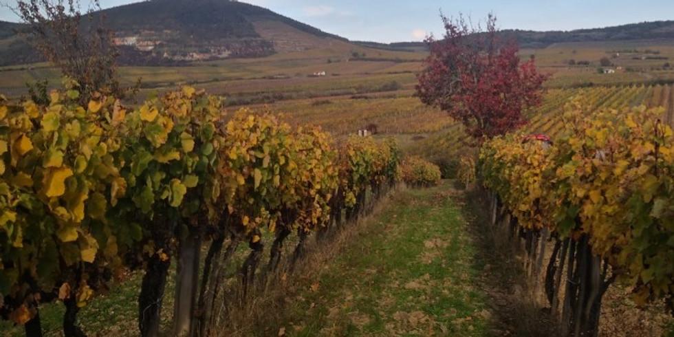 Vineyard promenade