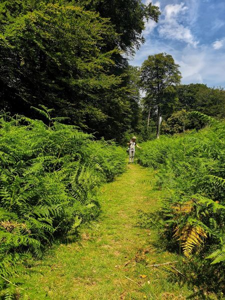 Hike through the Bolderwood Deer Sanctuary in Hampshire