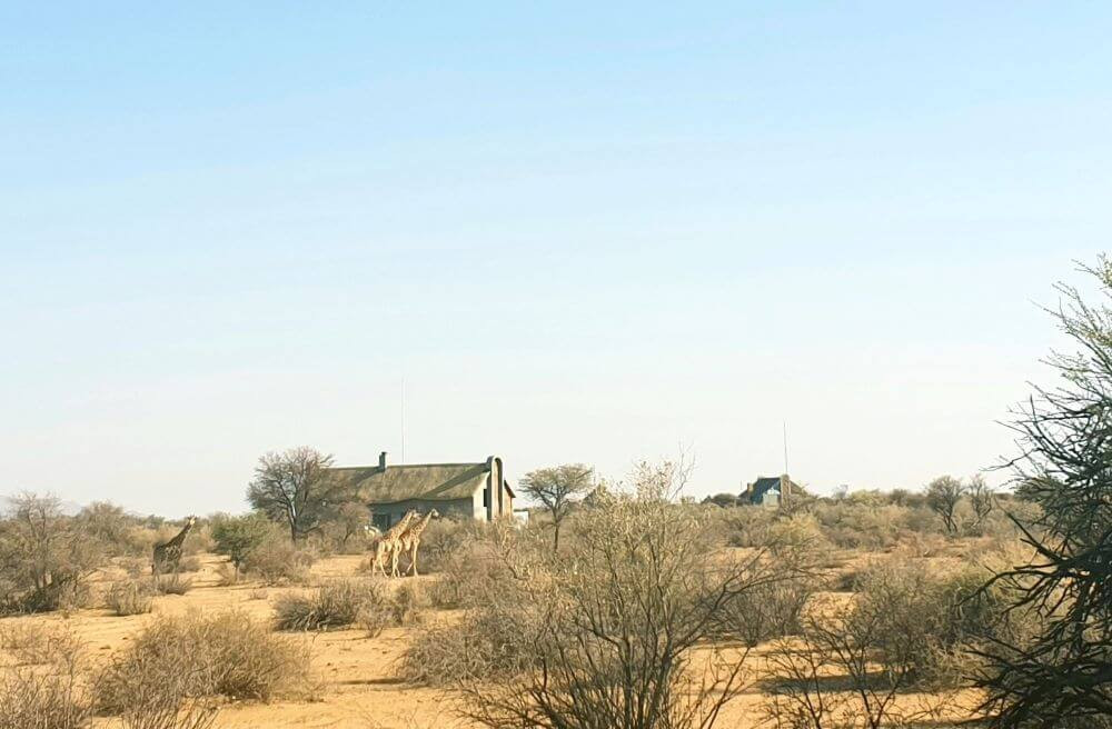 Wildlife spotting at Namibia's Naankuse lodge near Windhoek