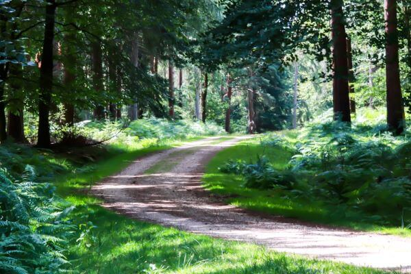 Walking route at Bolderwood Forest in Hampshire, England