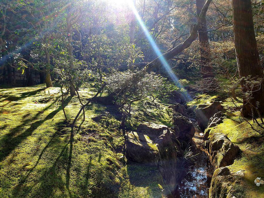 Moss gardens at Kyoto's Ginkaku-ji temple in Japan