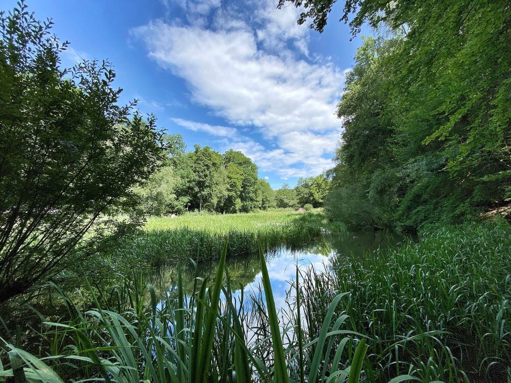 The Wetlands were our favourite part of Wakehurst's magnificent grounds.