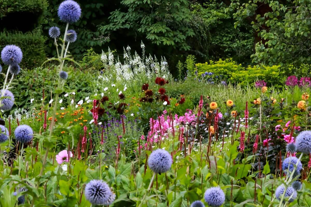 Flowers in bloom in the Walled Garden at Nymans - a review