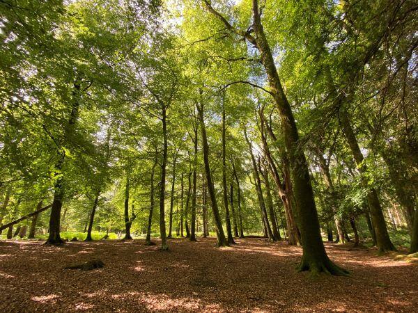 Stunning woodlands along a walking trail at Bolderwood Deer Sanctuary