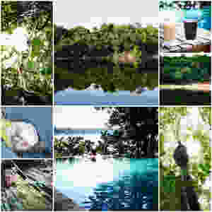 Collage of photos for review of Anavilhanas jungle lodge in the Brazilian Amazon